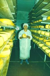 cheesefactory