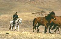 domestic_horses
