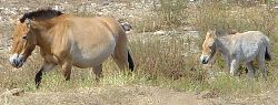 mare_foal2